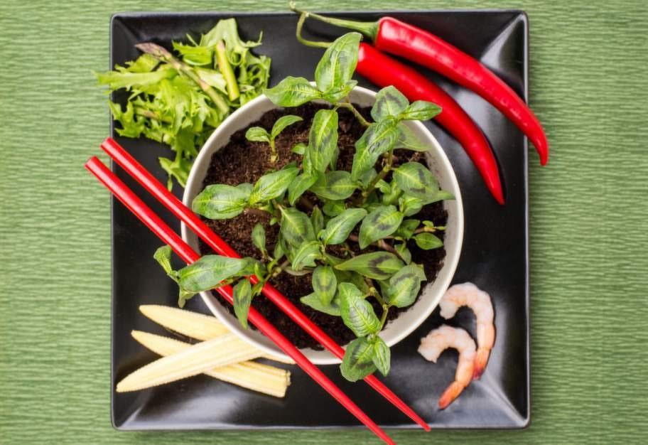<strong>Kryddstarkt.</strong> Korianderpilört används mycket i asistisk mat men passar även som smakförstärkare i vanliga rätter.