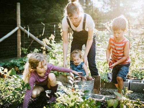 Att odla med barn är både roligt och lärorikt. Samtidigt som du odlar barnets intresse – växer ni tillsammans.