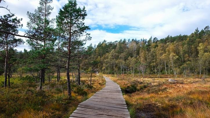 Less is more. Stefan Löfven uppskattar att promenera i en av Sveriges stora skogar. Det är mycket avkopplande i all sin enkelhet, menar han.