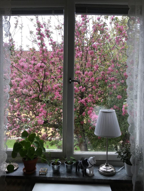 """På fönsterbrädan rymms ännu några dalahästar –och utanför blommar ett rosa äppelträd.  """"Det bildar en fantastiskt fin rosa tavla"""", säger Emelie."""