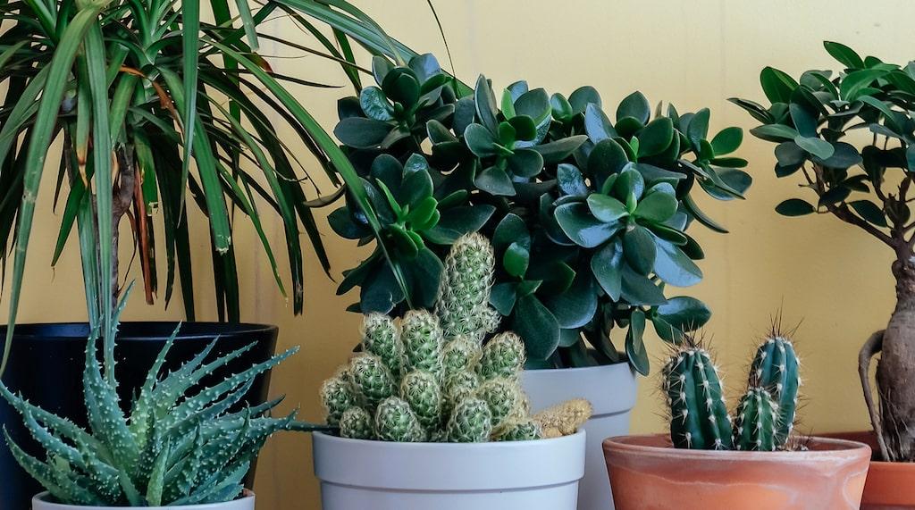 2020 vill vi ha växter som är lätta att ta hand om – och lätta att inreda med.