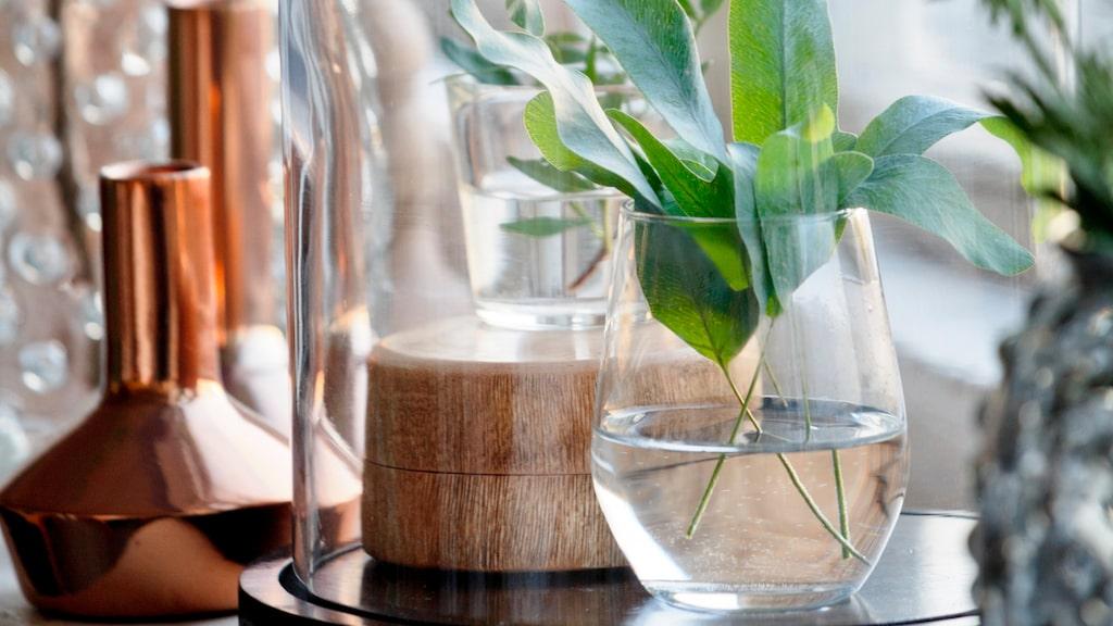 Här listar vi sex växter som bara behöver vatten en gång i månaden. Hur bra?!