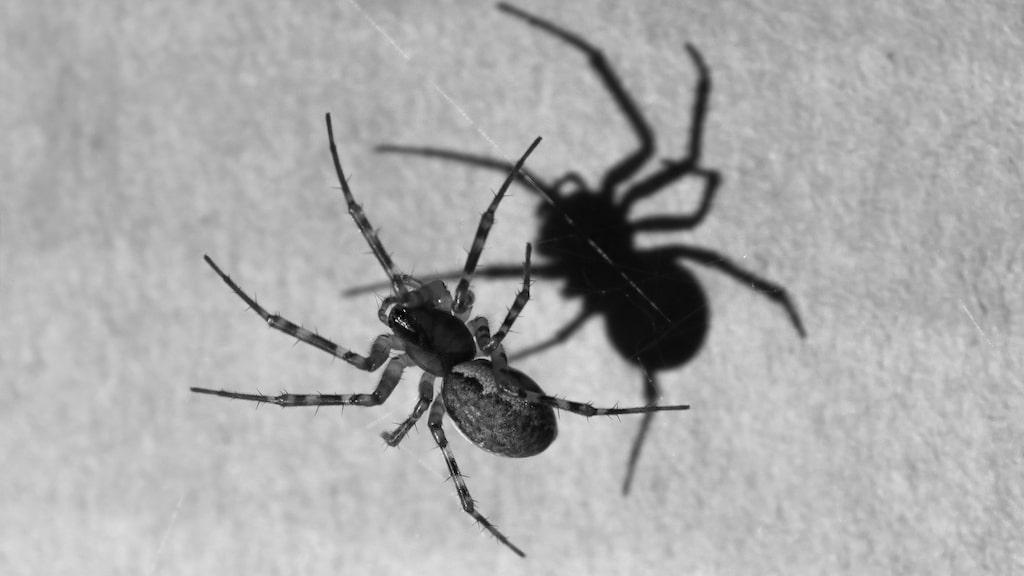 Snart är spindlarna i ditt hem ett minne blott. Läs det magiska tricket!