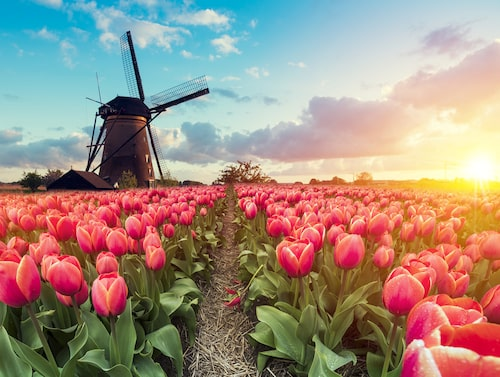 Rotterdam kommer ofta i skymundan för sin populära storebror, men placeras bättre i den nya undersökningen.