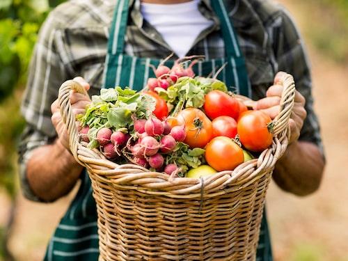 Råa grönsaker kan vara klurigt att matcha med vin, men med smakbryggor fungerar det bättre.