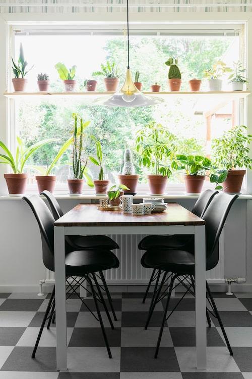 På en specialtillverkad hylla i köksfönstret ryms en stor del av Isabelles samling av gröna växter. Köksbordet kommer från Ikea, och bordskivan har sedan klätts in med dekorplast med träimitation, Bauhaus. Stolarna i retrodesign, Jysk.