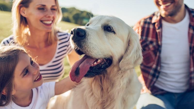 Tjatar barnen efter ett husdjur? Det kan vara ett svårt val – vilket djur kan ni ha i ert hem och hur påverkar det familjen?