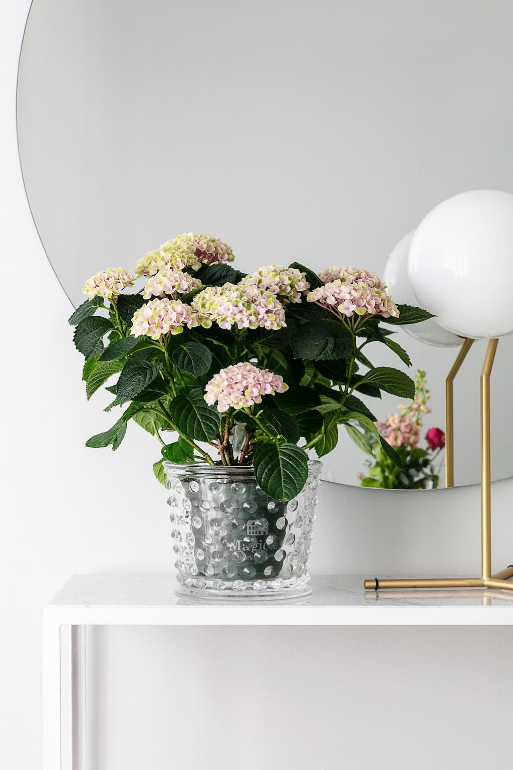 Skandinavisk design och rena linjer är vad som gäller för familjen Nilsson Borg. Krukan är Svenskt Tenns klassiska Hortus. Bordslampan kommer från Flos.
