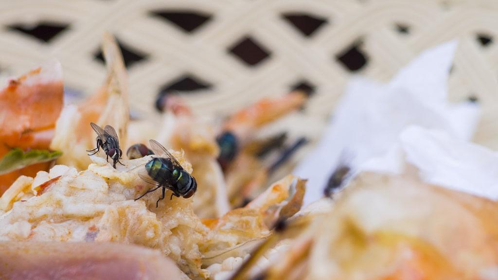 Alla flugor älskar matrester och smuts. Så se till att hålla rent hemma!