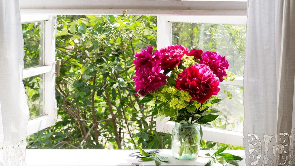 Finns det något härligare än att öppna fönstret under sommaren?