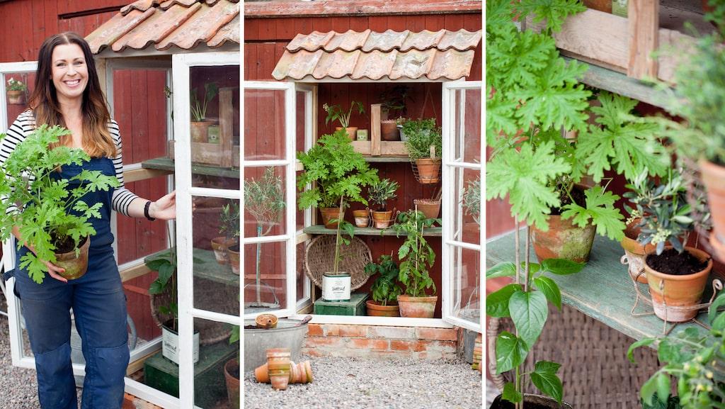 Skapa en egen härlig odlingshörna intill en husvägg. Med gamla vackra, spröjsade fönster fixar du en lyxig växthuskänsla.