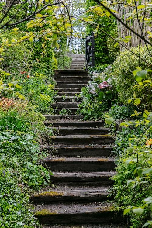 För att man ska kunna ta sig från en terrass till en annan slingrar sig trappor av kraftiga träbalkar, slipers. Trappan kantas av daggkåpa, daglilja, bambu, bergenia, ormöga, törel, vinca, hortensia, skogsaster, klätterbenved och kameleontbuske.