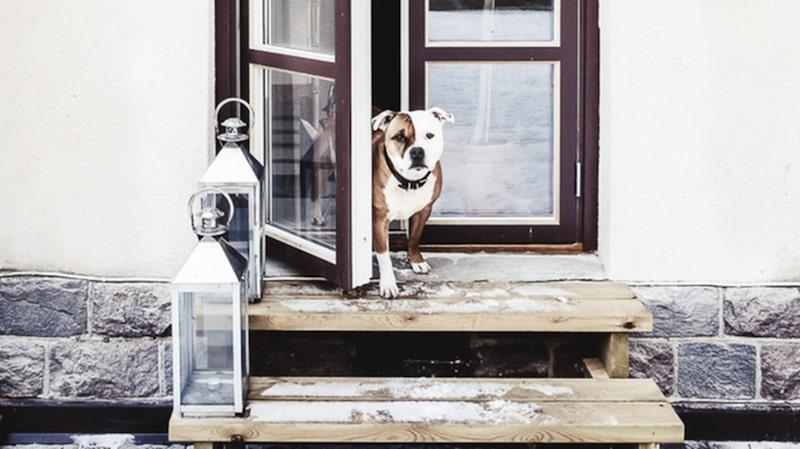Hunden Bentley finns nämligen med på några bilder!