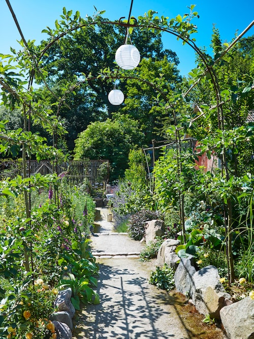 En äppelpergola leder ner mot köksträdgården och varje kväll tänds solcellslyktorna.
