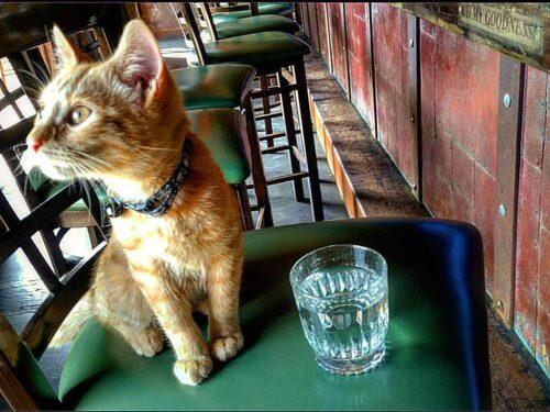 Party katt trivs som vagabond.