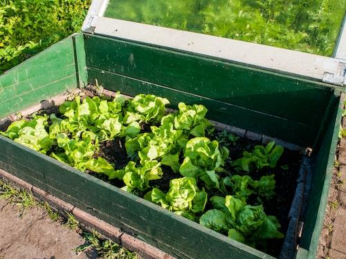 Var noga med att vädra så att det inte blir för varmt inne i växthuset.