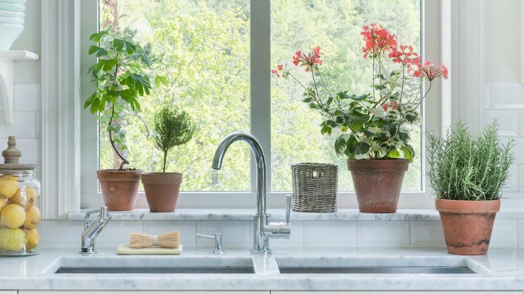 Växter och krukor från Floristkompaniet. Glasburk från PB home. Gul disktrasa, 125 kronor, och handgjord diskborste i trä, 180 kronor, Iris hantverket.