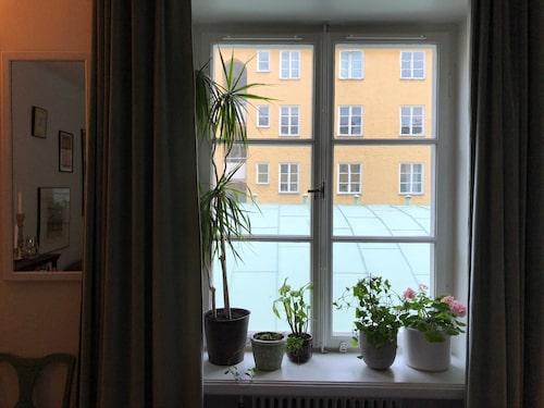 Fönster från stora rummet.