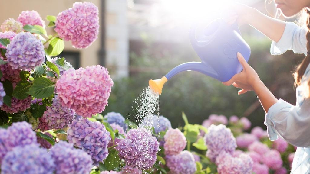 Buskar skapar stil och stämning, kan sätta ett färgtema i din trädgård och kan användas som rumsavdelare.