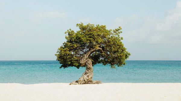 Resekatalogsvackra Eagle Beach på Aruba.