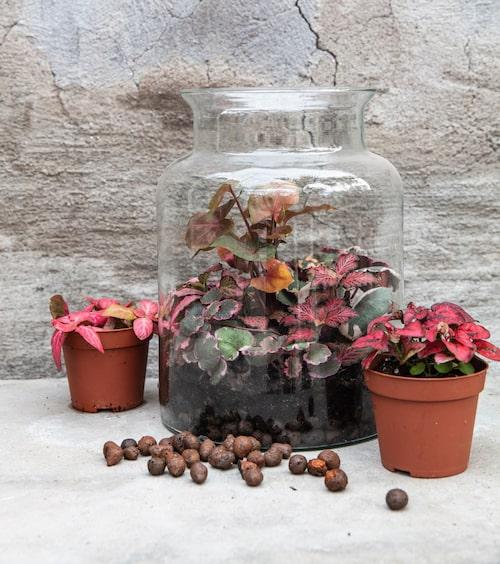Färgkoordinerade planteringar är lika snyggt i ett växtterrarium som i en trädgård, eller kanske ännu snyggare till och med.
