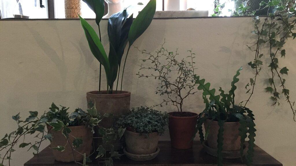 """""""Gröna växter har slagit igenon totalt. Det är som en boom"""", säger Ulrika Sjövall, designchef på Ellos. """"Det har väl också med den här stressade tillvaron att göra, att vi vill ha grönskan in i hemmet. Som en form av återhämtning."""""""