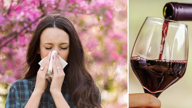 Pollenallergi och känslighet mot histaminet i vissa viner har en koppling - men somlig druvor är mer allergivänliga än andra.