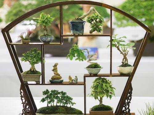 Växter som i den japanska konstformen bonsai. Kaskad-stil (längst upp i mitten). Skog eller grupp-stil (längst ner till vänster). Se förklaring under bonsai-stilar och former.