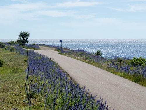 Längs kustvägen vid Ölands norra udde är det aldrig långt till havet.