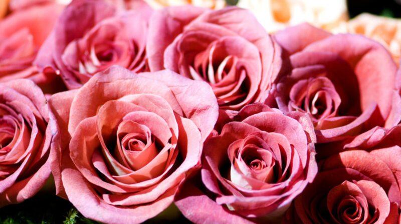 Vackra rosor är också klassiskt att ge bort på alla hjärtans dag.