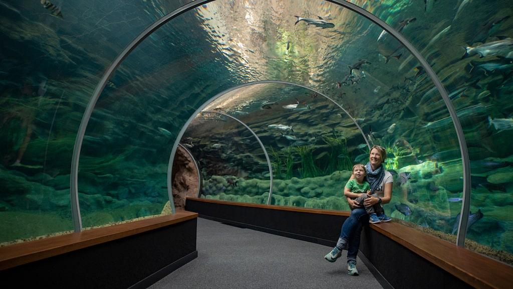 Akvariet Poema del Mar är en av Las Palmas senaste och mest populära sevärdheter.