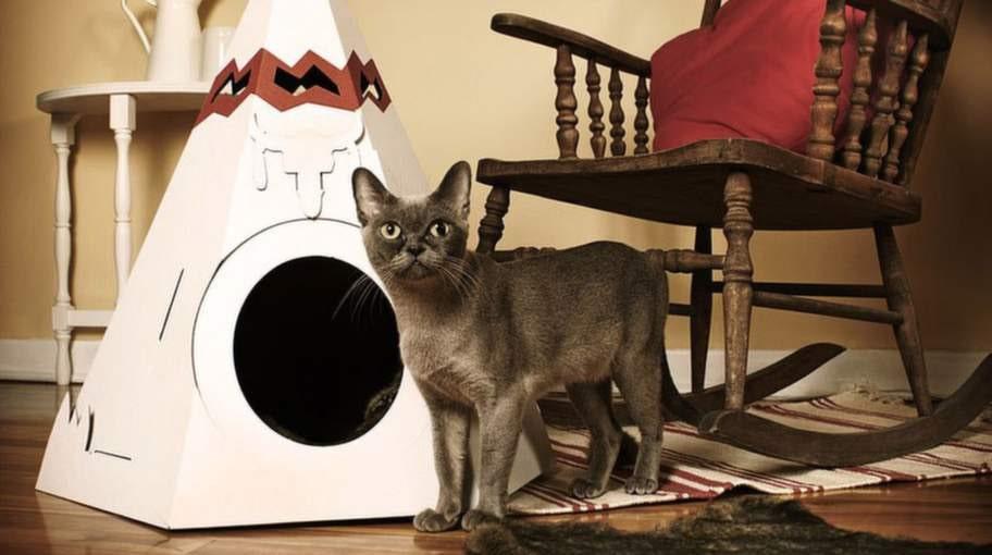 Katt-indiantältet.
