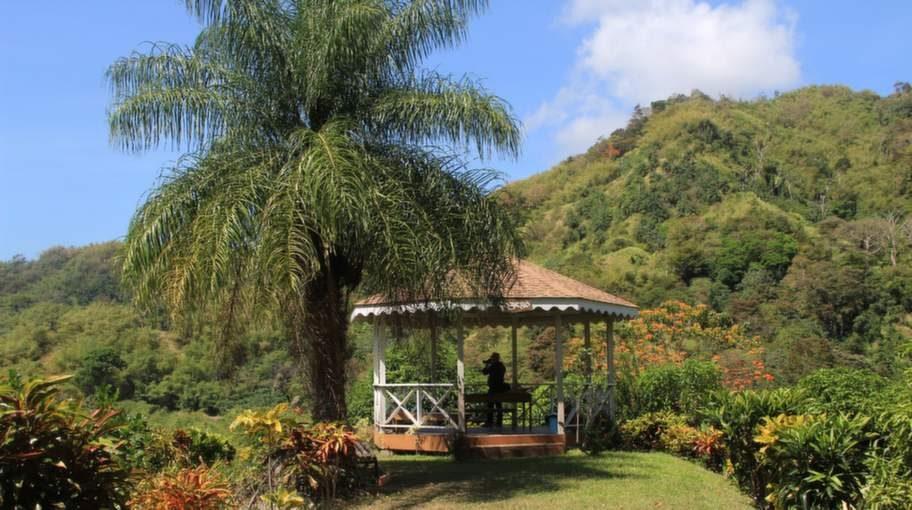 På Tobago Cocoa Estate odlas kakaobönorna till chokladbitarna som säljs i Sverige.