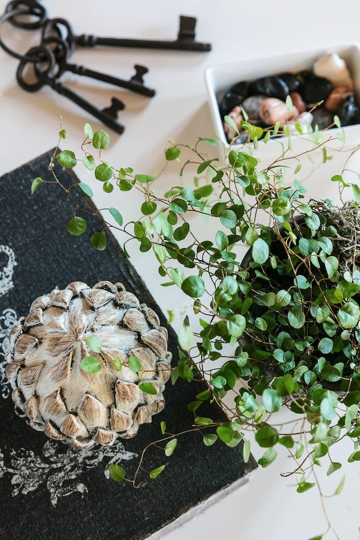 """Söta detaljer. Växten """"plättar i luften"""", en kronärtskocka, några gamla antika nycklar och en skål med chokladstenar."""