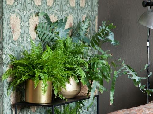 Ormbunkar och gullranka är snygga gröna växter.
