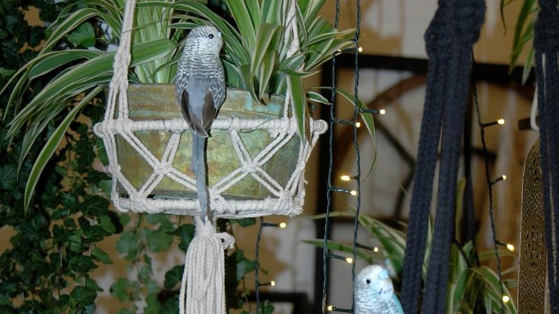 Fina små fåglar piffar upp vilken trädgård som helst.