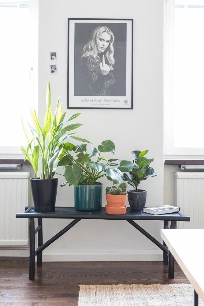 Bilden på Zara Larsson har Kasper köpt på Fotografiska. På bänken från Granit samlas krukväxterna.