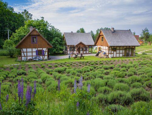 Underbar lavendelfarm i Polens bortglömda Kaszuby-regionen.