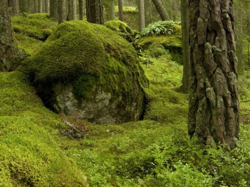 Urskog, så som den existerar både i Tyresta- och Tivedens nationalparker.