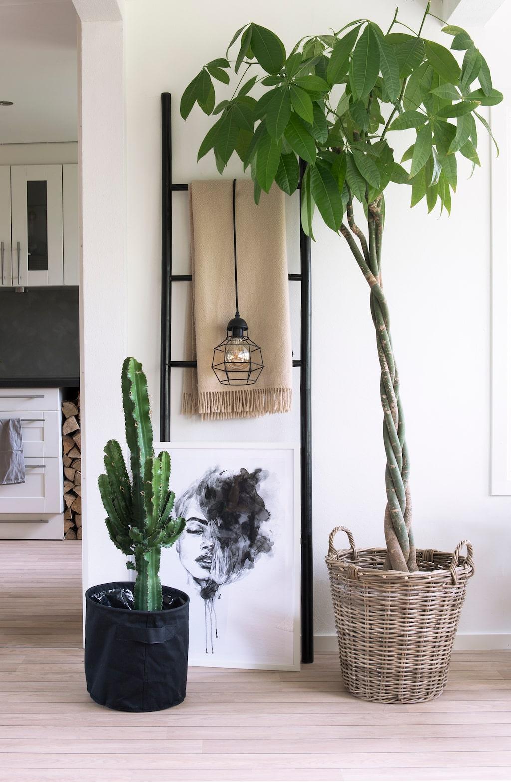 Kaktus & kastanj. Kaktus och strandkastanj tillsammans med print från Pinly.se, stege från ÖoB och en pläd köpt på Erikshjälpen.