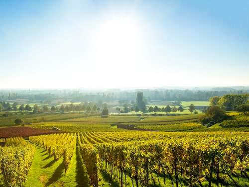 Kring Bordeaux har man traditionellt haft mycket köttdjur och fågel som ofta resulterar i patéer och terriner.