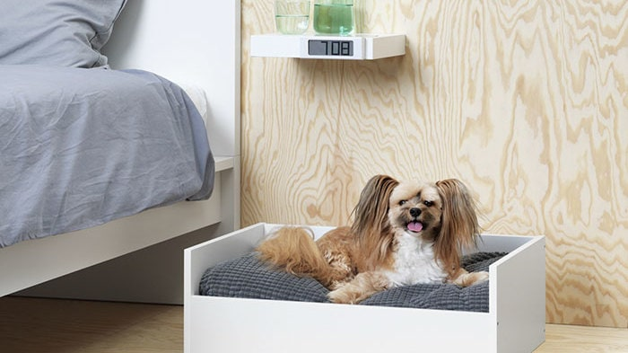 Möbler finns för båda hund och katt.