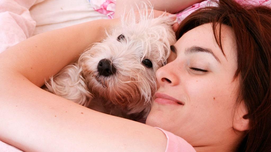 Studien visar att sömnkvaliteten var bättre hos de kvinnor som sover med hundar.