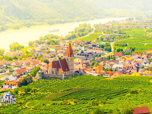 Vinodling i distriktet Wachau i Österrike.