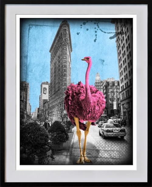 """""""Flatrich pinkish"""" av Lars Tunebo. När han började göra djur i citymiljöer var det för en djurrättsorganisation."""