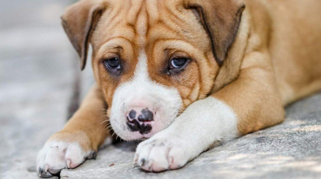 När en hund tittar på oss, så tittar vi tillbaka. Och när vi tittar tillbaka så tittar hunden ännu mer på oss. Detta utbyte gör att det frigörs lyckohormoner.