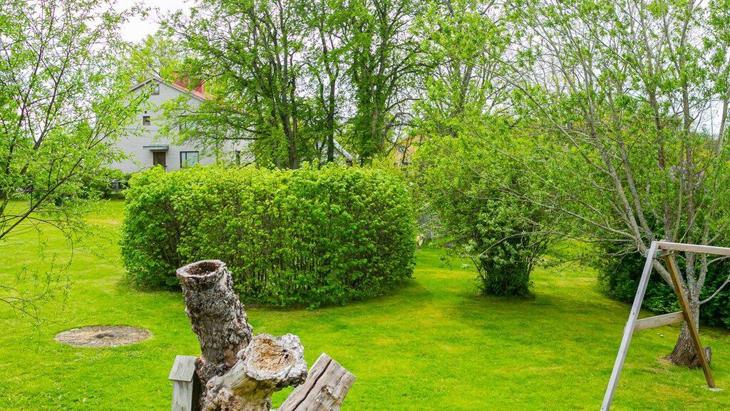 Tomten är grönskande med både träd och buskar.