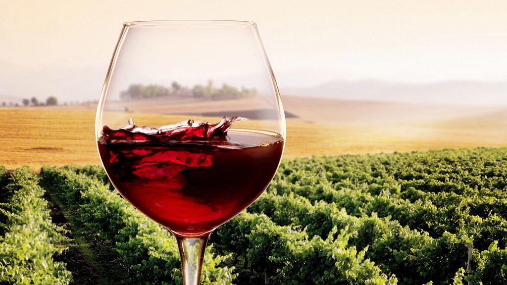 Pinot noir är en av de mest trendiga druvorna just nu, och odlas i olika delar av världen.