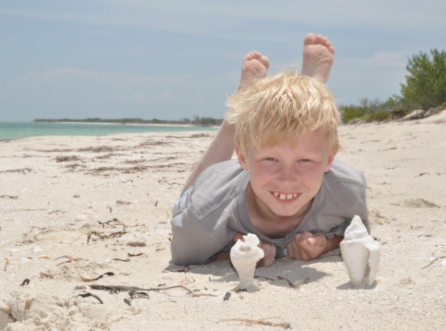 Massor av snäckor på en öde strand.