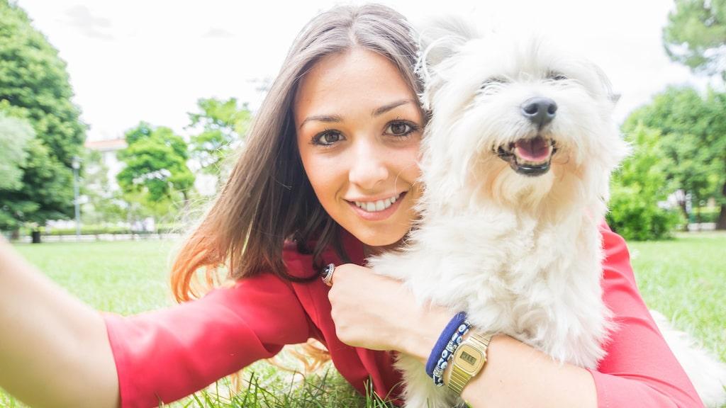 Brun hundfästing kan infektera både hundar, katter, hästar, samt stora och små idisslare, och kan överföra allvarliga sjukdomar som babesios.